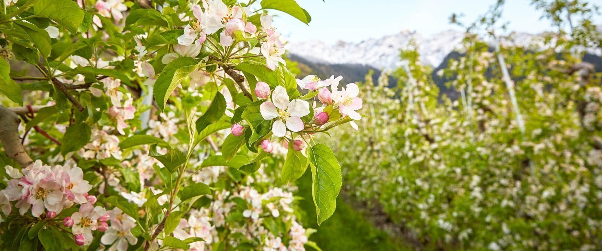 Frühlingsurlaub in Südtirol