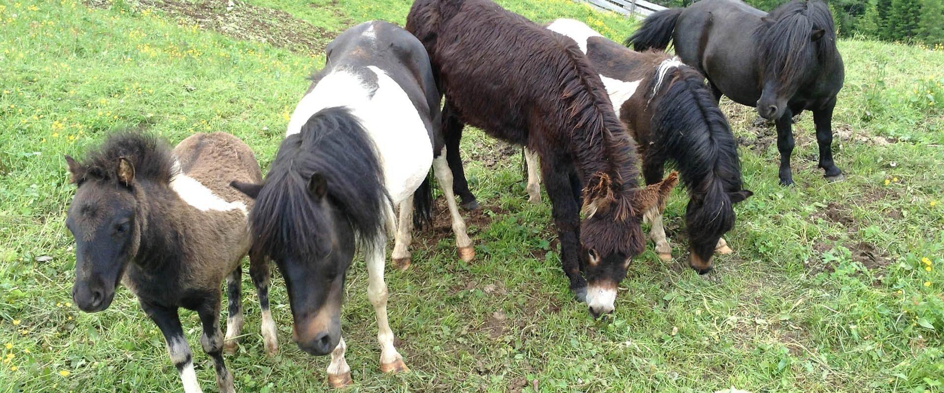 Kinderferien & Tiere auf dem Bauernhof im Schlerngebiet – Südtirol